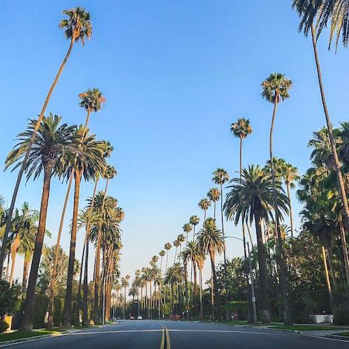 Kostnadsfri bild av la, palm, Palmer, väg