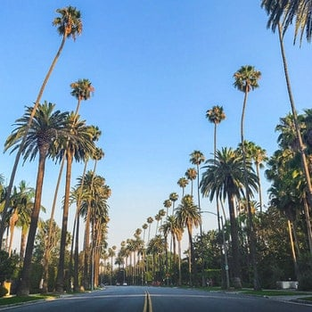 Free stock photo of road, palm, palm trees, la
