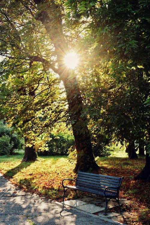 Free stock photo of against the sun, autumn, autumn color