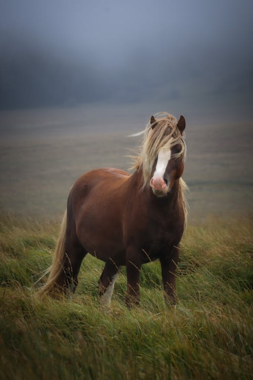 Brown and White Horse on Green Grass Field