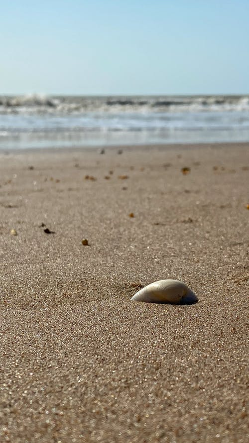 White and Gray Sea Shell on Brown Sand