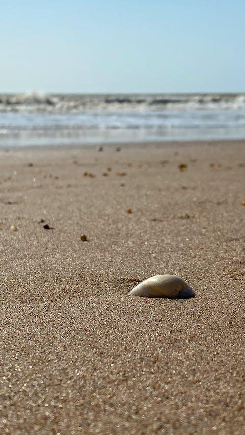 bir başına, dalga, deniz içeren Ücretsiz stok fotoğraf