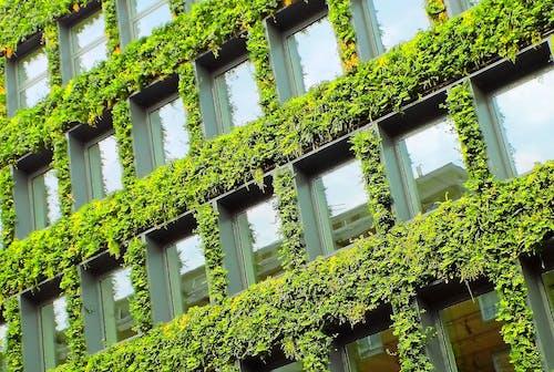 Základová fotografie zdarma na téma budova, listová budova