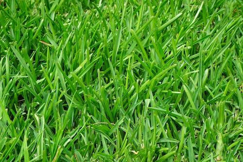 Pole Zielonej Trawy