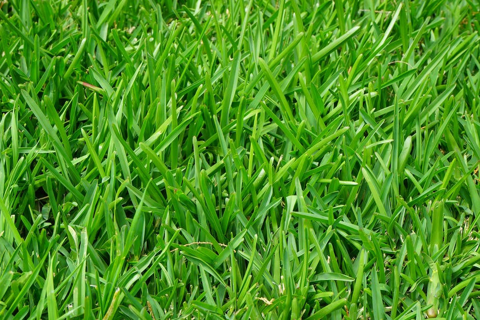 New free stock photo of nature, grass, meadow