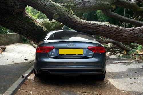 Black Bmw M 3 Parked Beside Tree