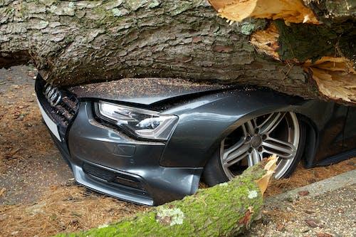 Black Car Beside Brown Tree Trunk