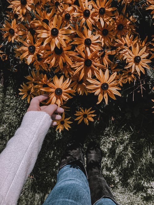 Unrecognizable person in casual clothing touching small delicate flowers with dark stigmas and yellow petals in daylight
