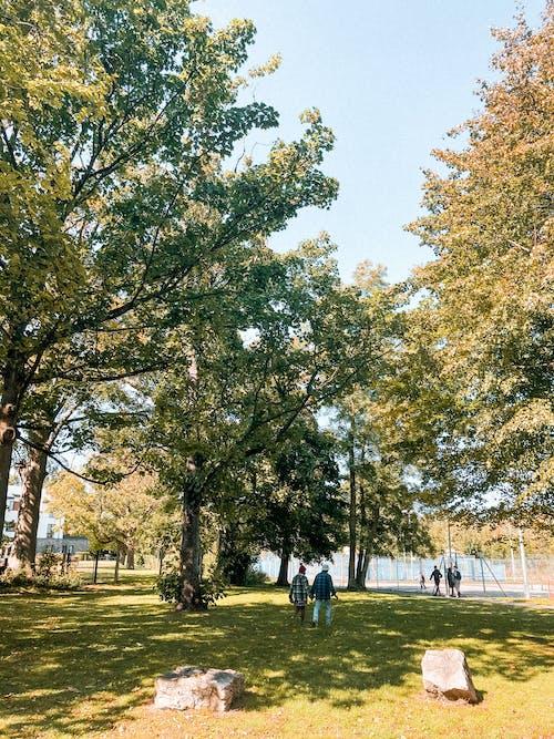 Ảnh lưu trữ miễn phí về bãi cỏ, bình yên, bóng, cây