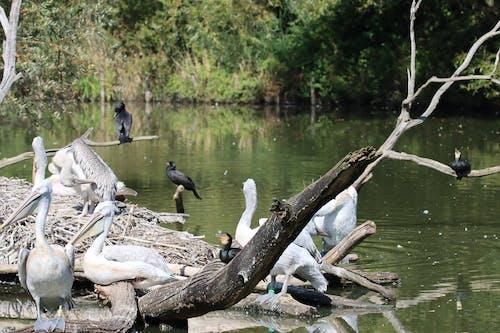 Free stock photo of waterbirds