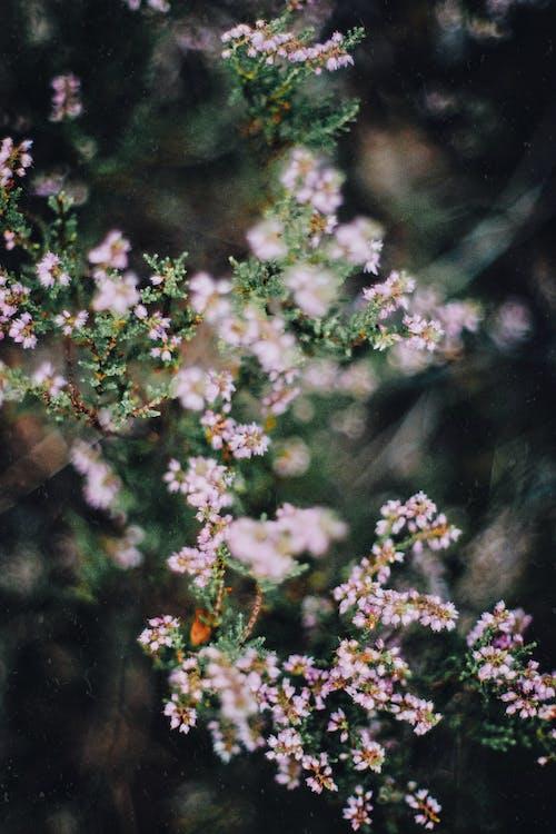Ingyenes stockfotó cserje, fényes, fű, gyönyörű természet témában