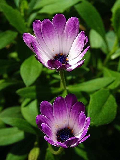 Beautiful Purple Flowers in Close Up Photography