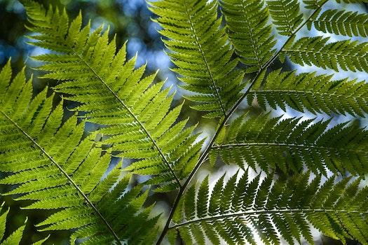 Green Leaf Plant Close Up Photo