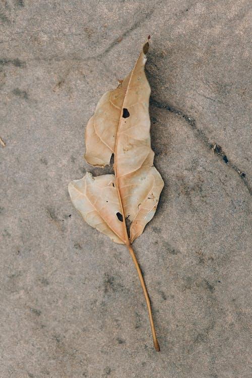 Kostnadsfri bild av asfalt, betong, falla
