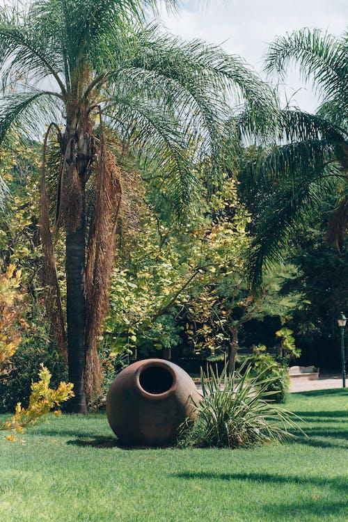 경치, 공원, 나무의 무료 스톡 사진