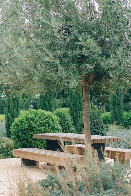 공원, 나무, 나무 둥치의 무료 스톡 사진