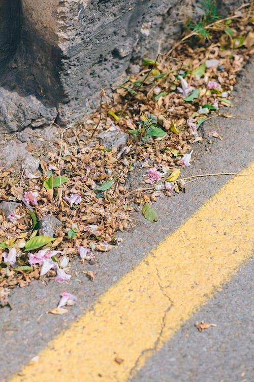 Photos gratuites de asphalte, chaussée, feuilles