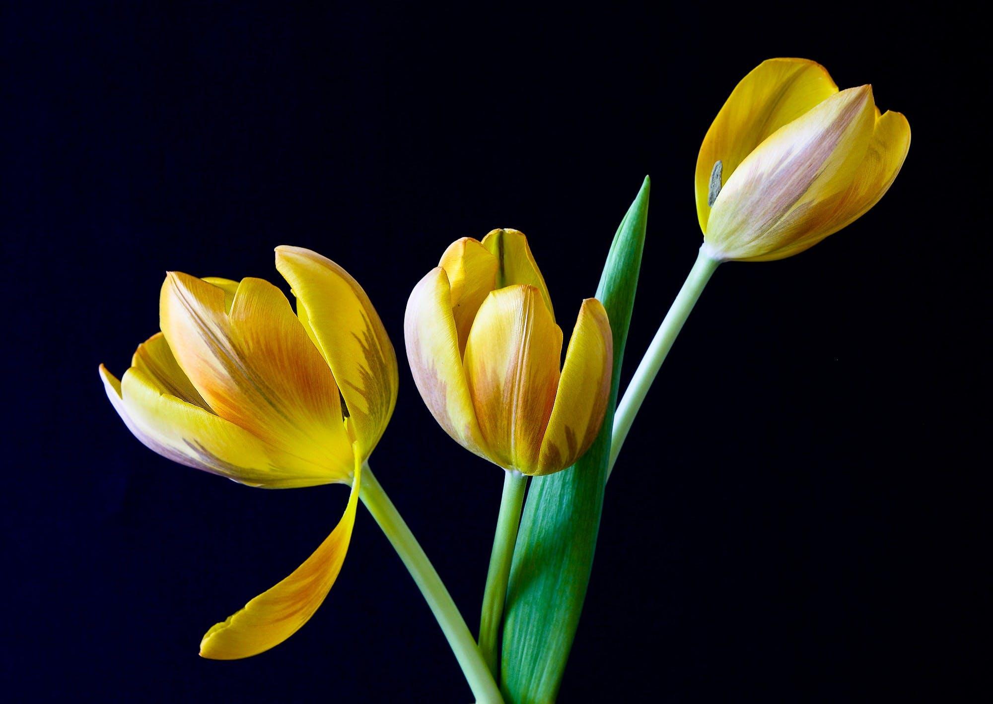 blumen, frühling, gelb