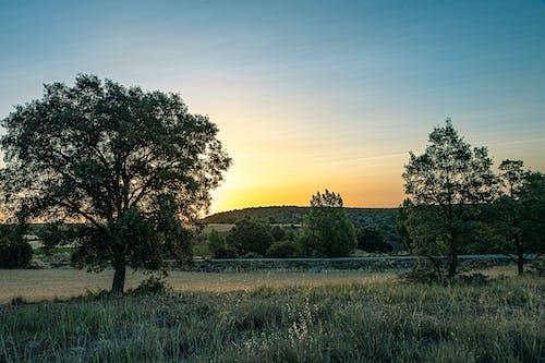 Gratis lagerfoto af morgengry