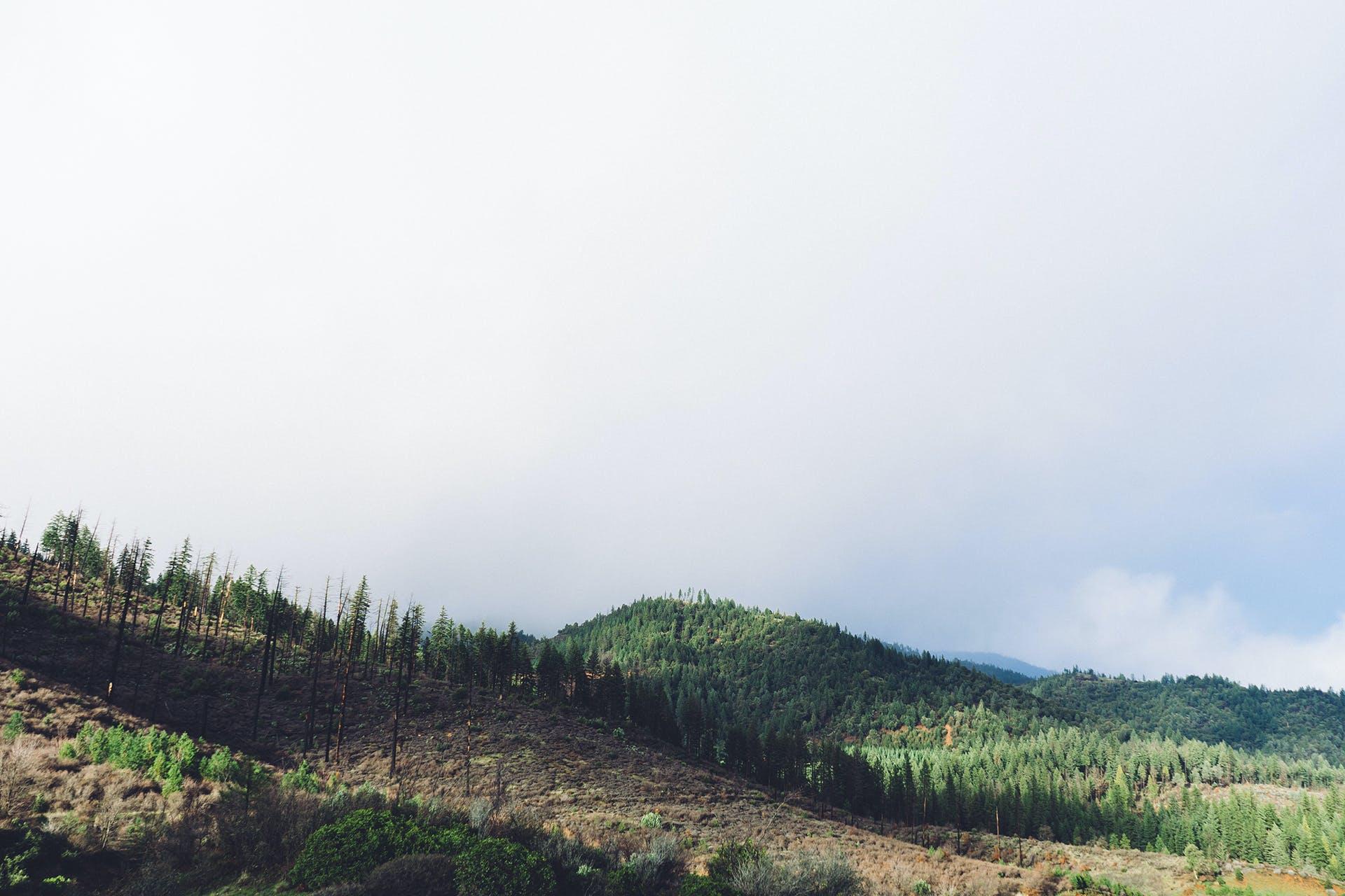 Gratis arkivbilde med kupert, natur, skog, skyer