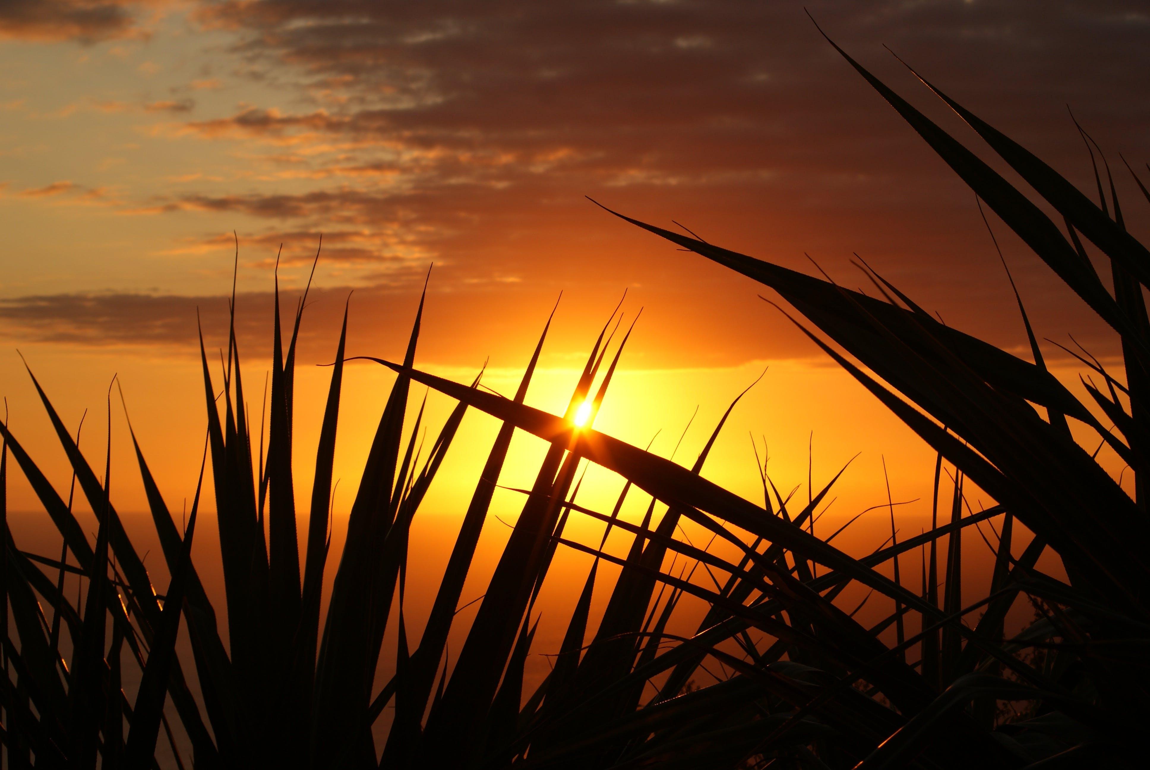 Silhouette of Grass Under the Sepia Sky