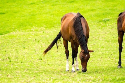 Ảnh lưu trữ miễn phí về con ngựa, con vật, động vật