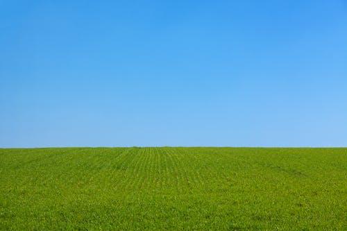 Photos gratuites de clairière, dehors, herbe, nettoyer