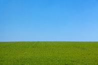 landscape, field, grass