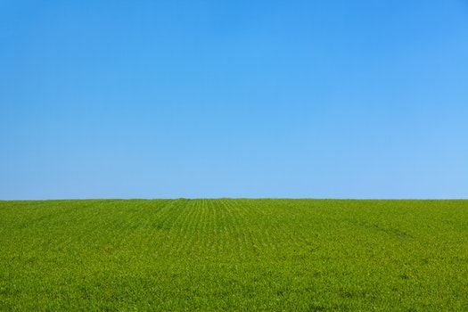 Green Grass Field Under Blue Sky
