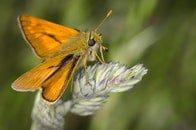 nature, orange, insect