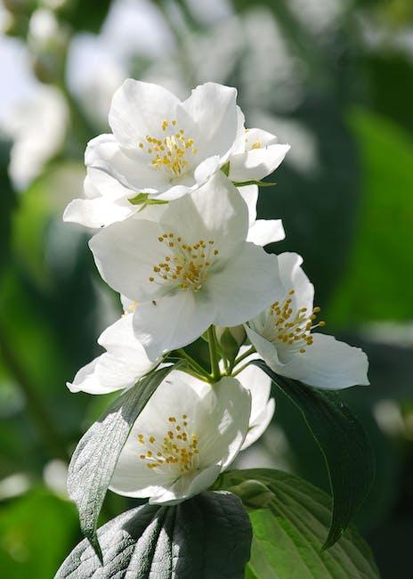 Shrub white flower close up