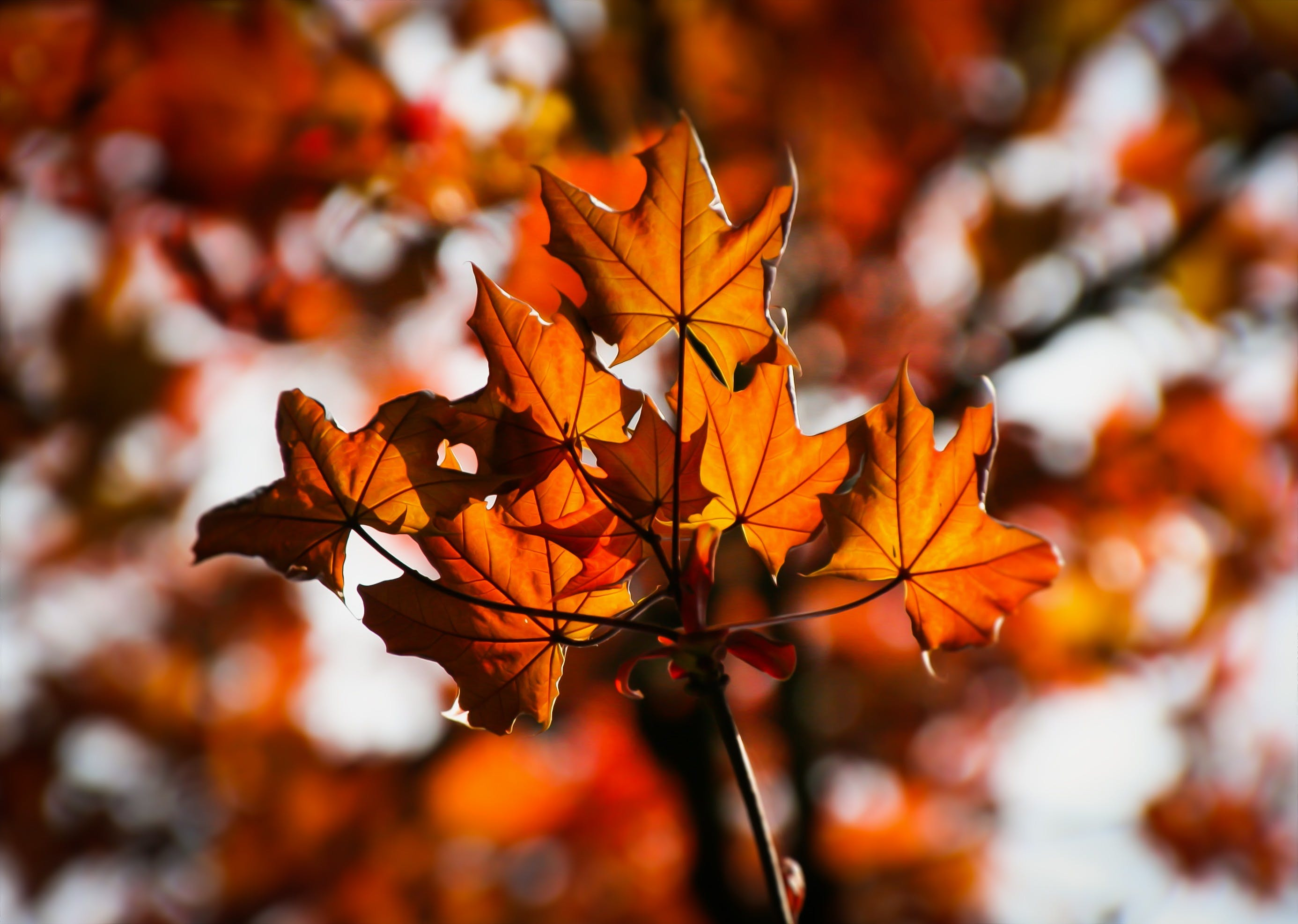 Orange and Brown Leaf