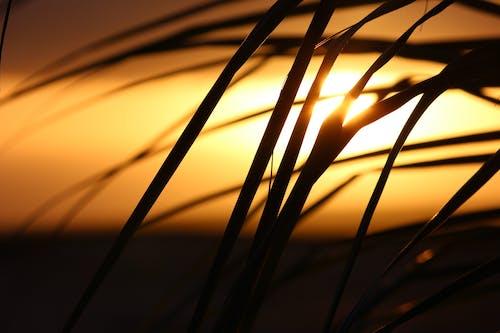 คลังภาพถ่ายฟรี ของ กก, ตะวันลับฟ้า, พระอาทิตย์ขึ้น, หญ้า