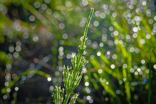 Free stock photo of bokeh, green, green background