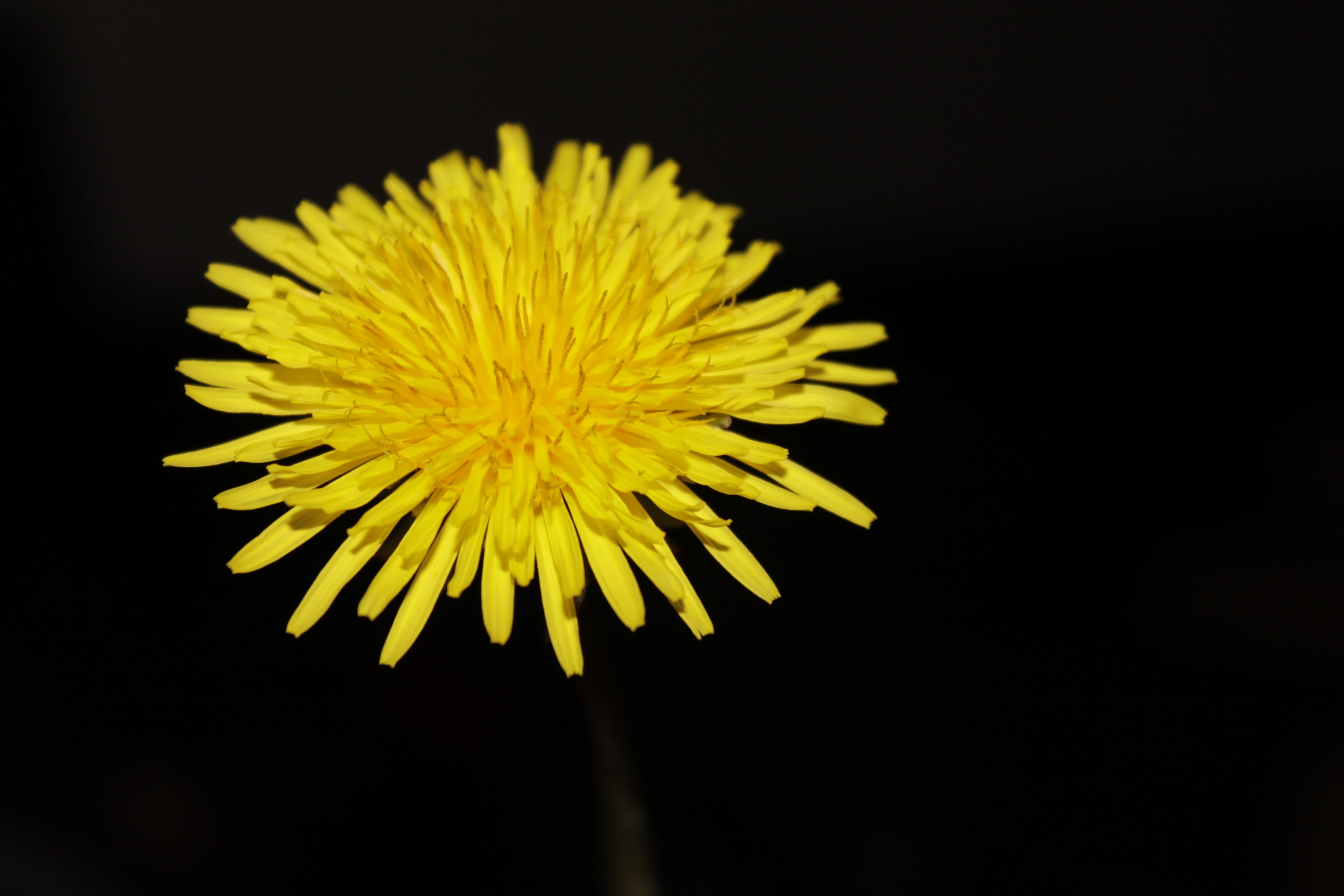 Close Photography of Yellow Aster