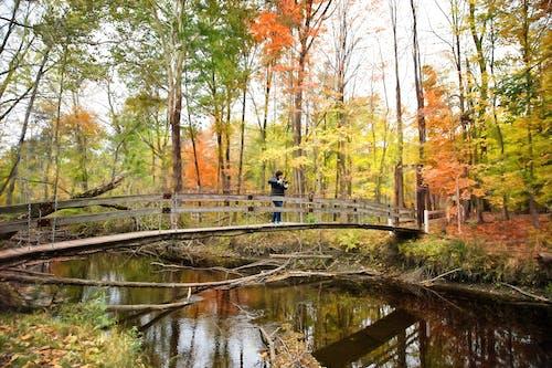 Immagine gratuita di acqua, alberi, albero, autunno