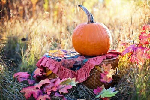 Immagine gratuita di albero, autunno, cadere, cestino