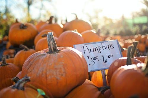 Immagine gratuita di agricoltura, autunno, cadere, cibo