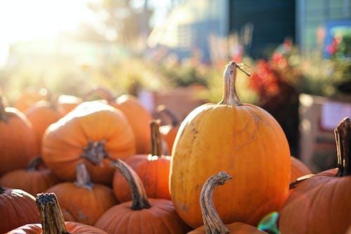 Immagine gratuita di autunno, cadere, cibo, comprimere