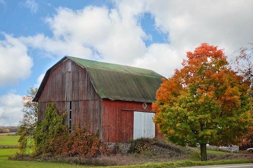 Immagine gratuita di albero, albero colorato, architettura, autunno