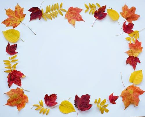 Immagine gratuita di acero, autunno, cadere, colorato