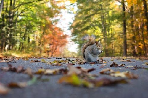 Immagine gratuita di acqua, albero, animale, autunno