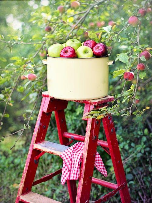 คลังภาพถ่ายฟรี ของ maçãsvermellesdanverdes, woodlet, กระได, กลางแจ้ง