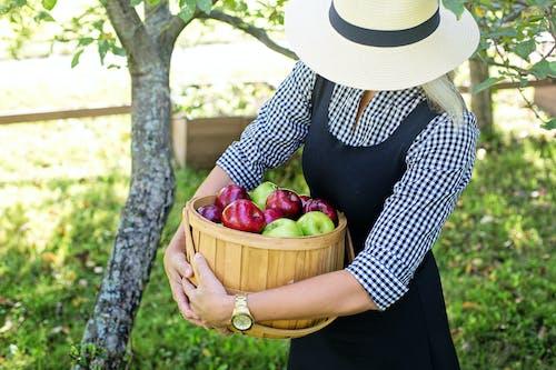 คลังภาพถ่ายฟรี ของ maçãsvermellesdanverdes, mulhercolhendomaçãs, woodlet, กลางแจ้ง