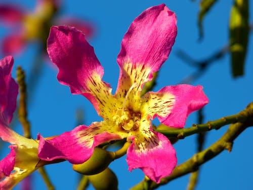 Foto d'estoc gratuïta de flor, florir, natura, naturalesa