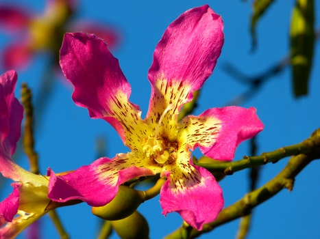 Purple and Yellow Petaled Flower in Bloom