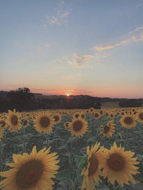 Fotos de stock gratuitas de al aire libre, amarillo, anochecer