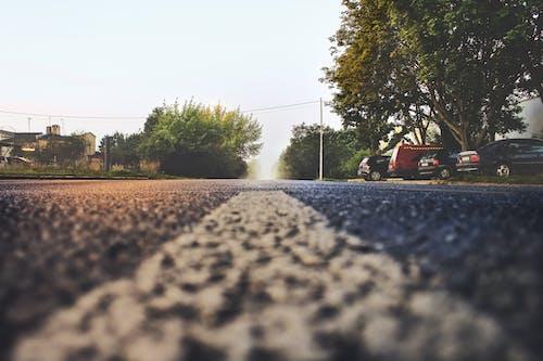 거리, 고속도로, 도로, 식물의 무료 스톡 사진
