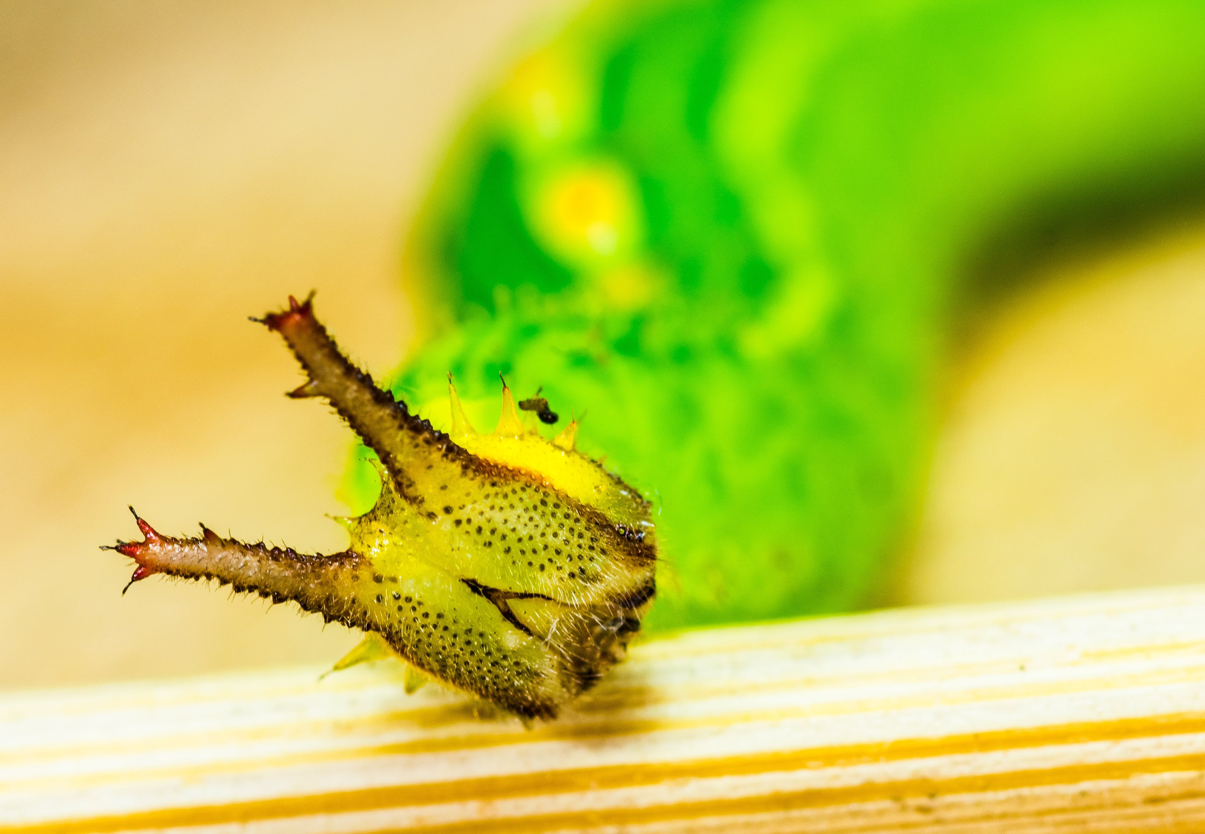 Free stock photo of animal, head, green, insect