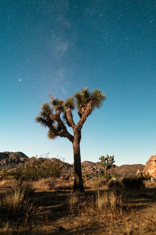 Green Palm Tree Near Brown Rock Formation Under Blue Sky